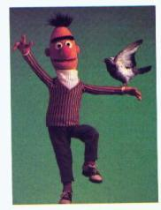 Bert and a pigeon
